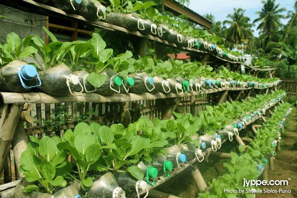 Vegetable garden on recycled water plastic bottles jyppe - Plastic bottles for gardening ...