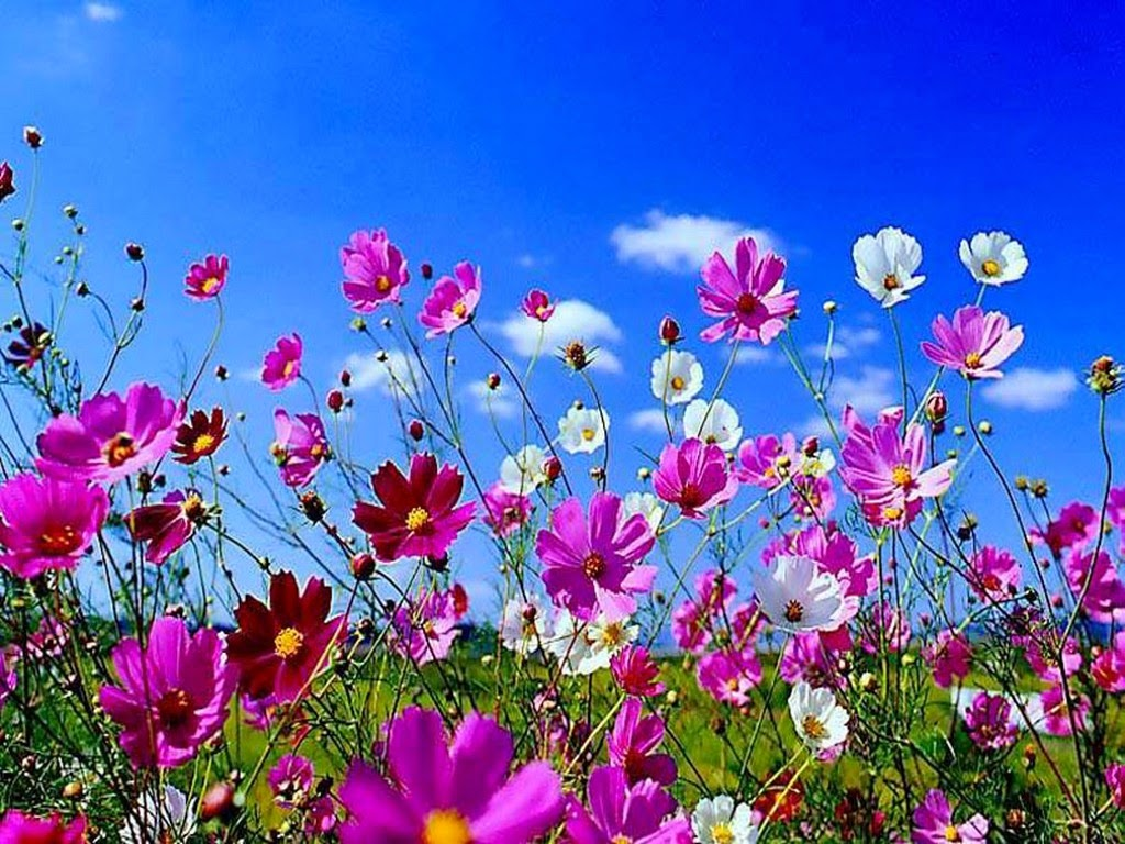 Spring season 2014 wallpapers hd free download unique wallpapers - Flowers that bloom from spring to fall ...