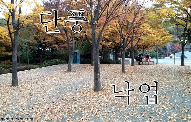 Hojas otoñales y hojas secas en coreano