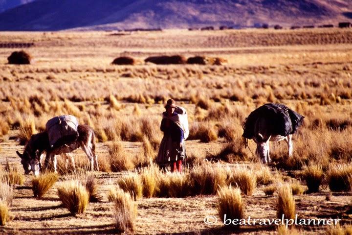 Altopiano peruviano