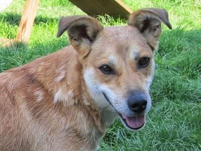 Gatuhunden Becka bloggar om sitt nya liv
