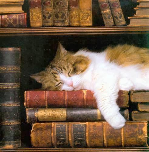 Descansar a cabeça sobre velhos livros...