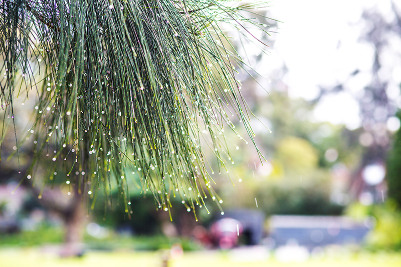 CrystalPhuong- Singapore Travel Blog- Raining day in Perth city