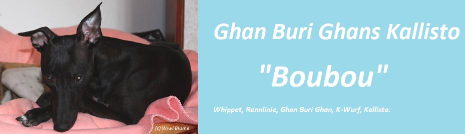 """Ghan Buri Ghans Kallisto """"Boubou"""""""