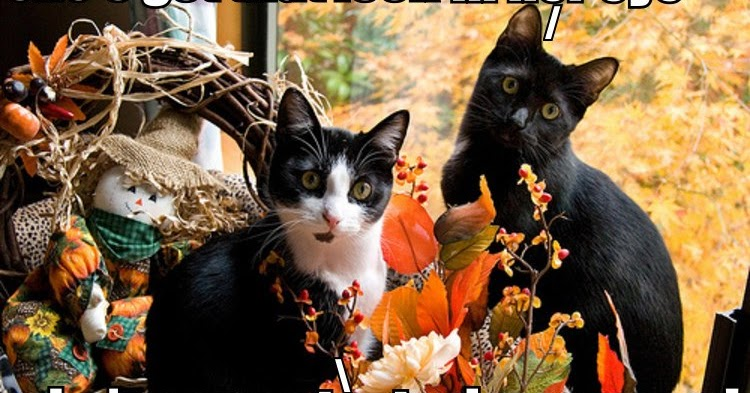 Cute And Funny Pictures And More Fall Or Thanksgiving Cat Picture