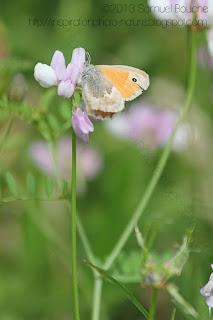 cadrage vertical papillon sur fleur