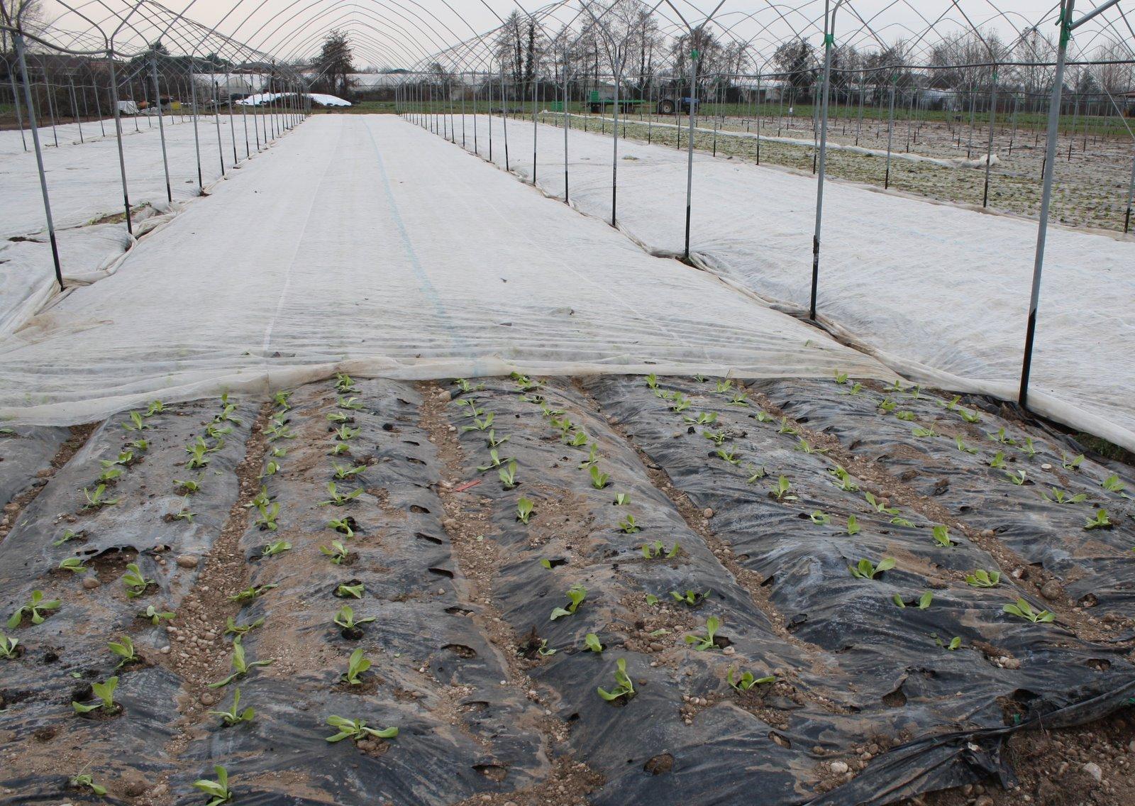losmogotes: agricoltura industriale