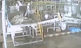 Trabajador Pierde el Pie en Trituradora