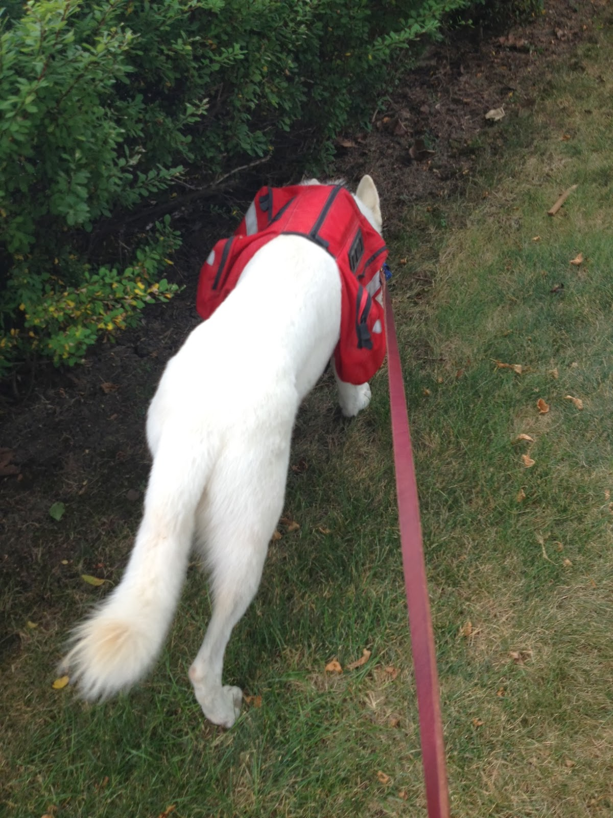 Get Dog Off Leash Heel