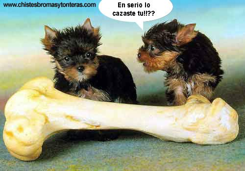 Imagenes De Animales Con Frases Graciosas Para  - imagenes de animales con frases chistosas para compartir en facebook