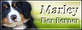 ☆ Marley ☆