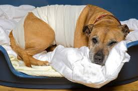 5 Remedios Naturales para tu Perro