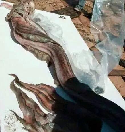 mermaid, fake or real?