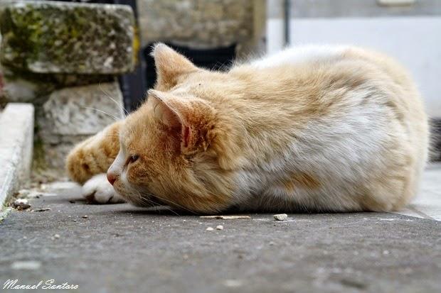 Pennapiedimonte e i gatti