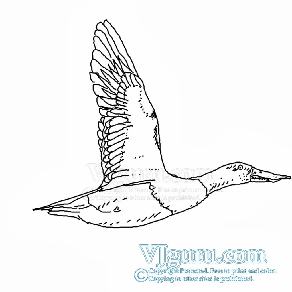 how to draw flying duck including high quality coloring page