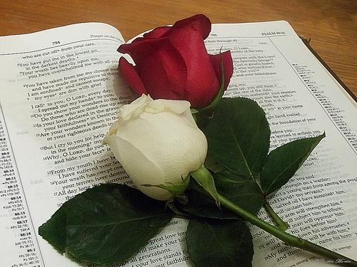 http://2.bp.blogspot.com/-Tl9SF9ZlneU/TuvYKXFsvlI/AAAAAAAABFs/TJldrEVeRIY/s1600/bible+rose.jpg