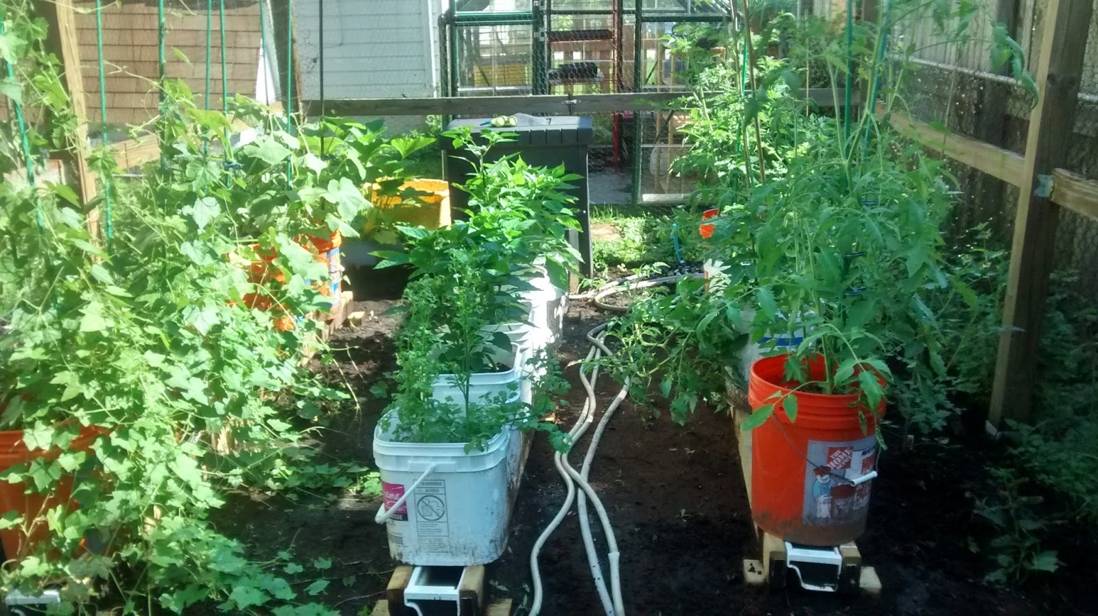 You May Notice That The Tomato Plants Are Not In The Middle Rain Gutter  Anymore. Thatu0027s Part Of The Beauty Of This Setup That I Really Love.
