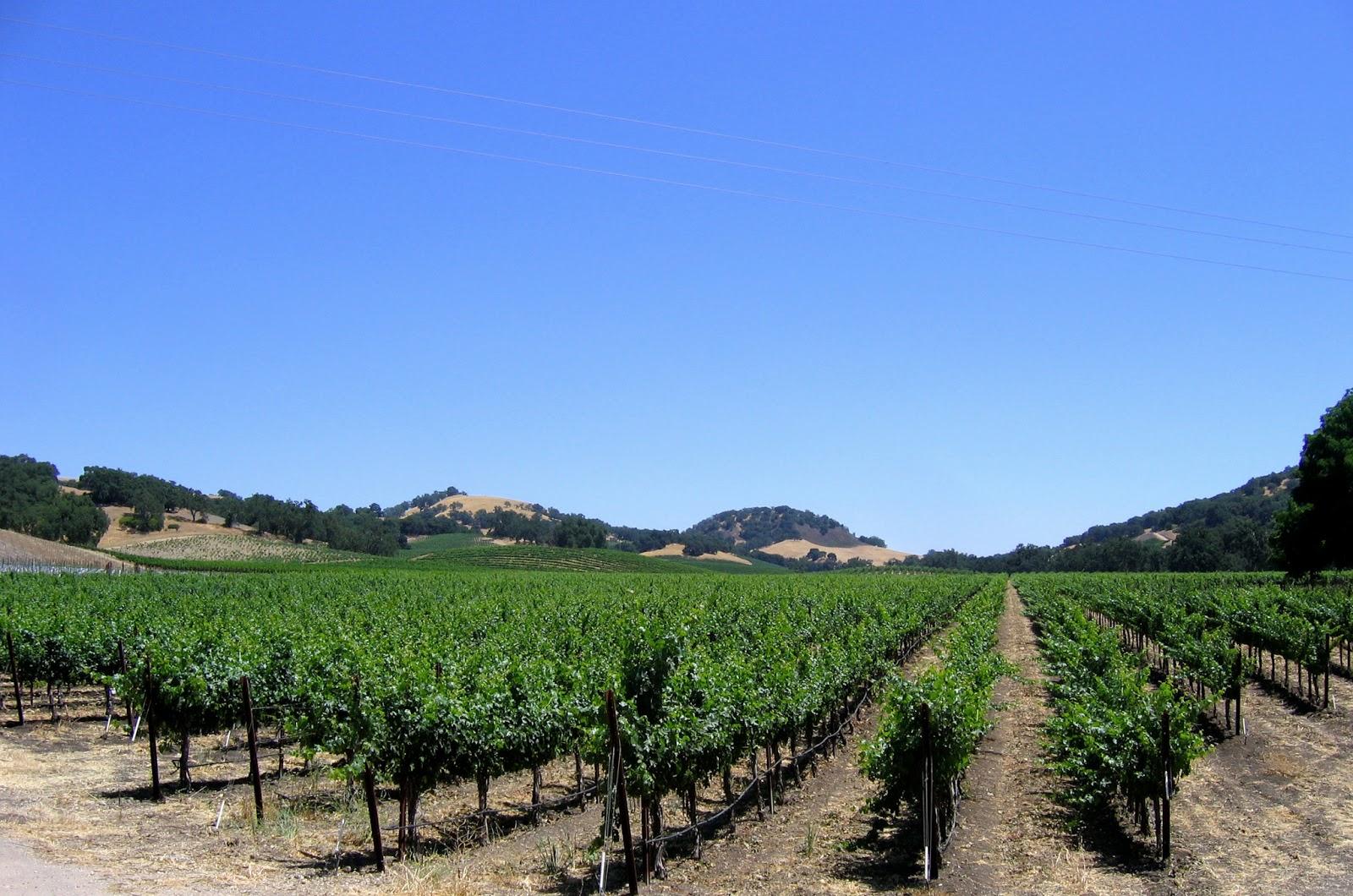 Halter Ranch Vineyard - Paso Robles, California   Erik