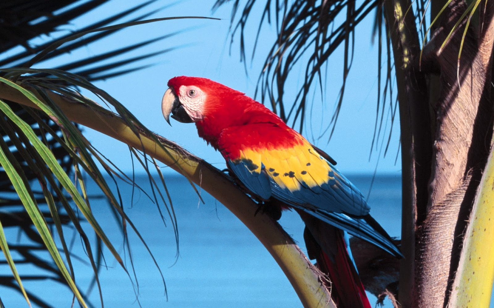 50 Beautiful Birds HD Wallpapers  Free Download from