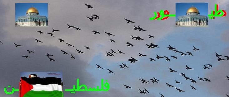 طيـــــــور           فلسطين