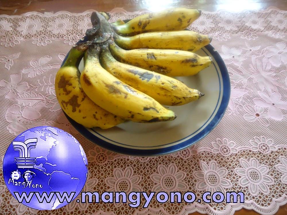 Cara pematangan pisang secara alami. Ini adalah pisang MANALAGI ...