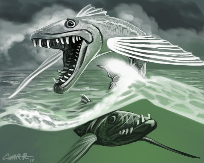 the creative writing the bermuda barracuda