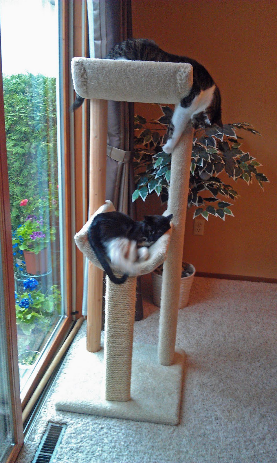 ... Laurence: Jackson Galaxy Said To Get A Cat Tree - 957x1600 - jpeg