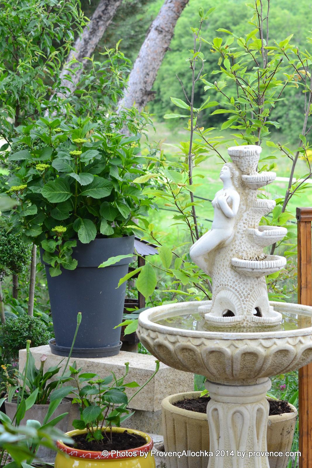 fontaine,hortensia