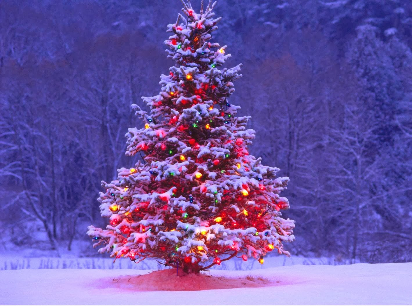 Best Best Beautiful Festival Christmas Tree Wallpapers Free Hd