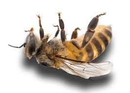 The Bee Killer