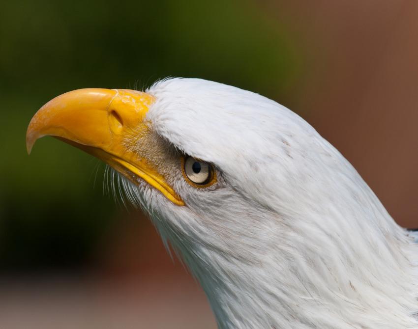 Adler auf der Adlerwarte Berlebeck
