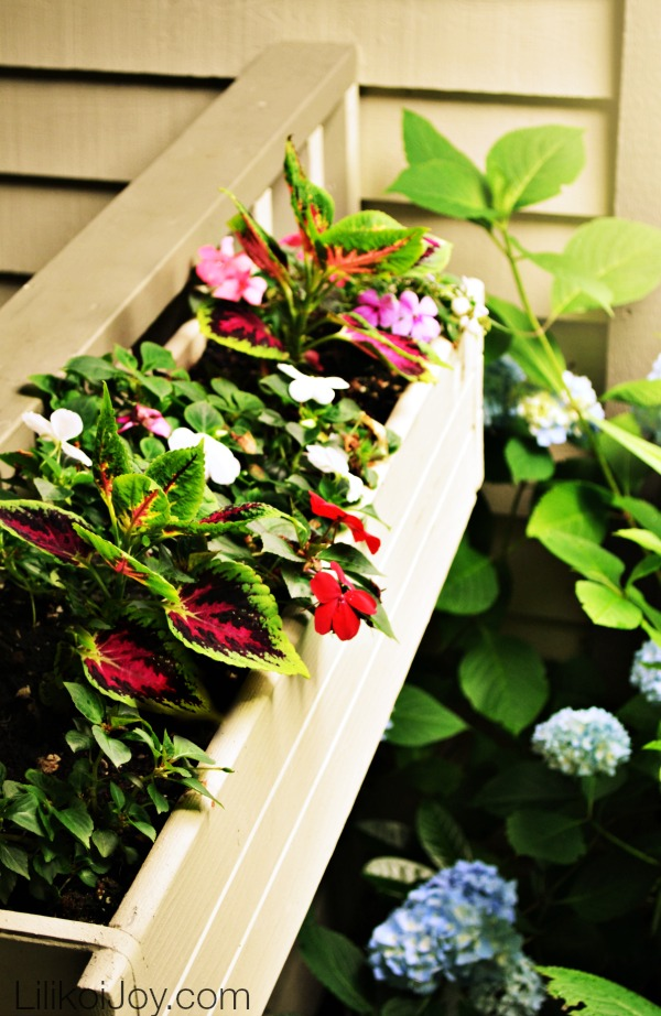 Summer Garden Tour: container box with impatiens and coleus