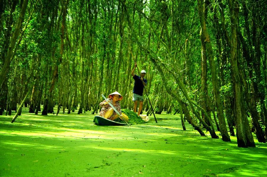 Thưởng ngoạn những khu rừng đẹp nhất Việt Nam2