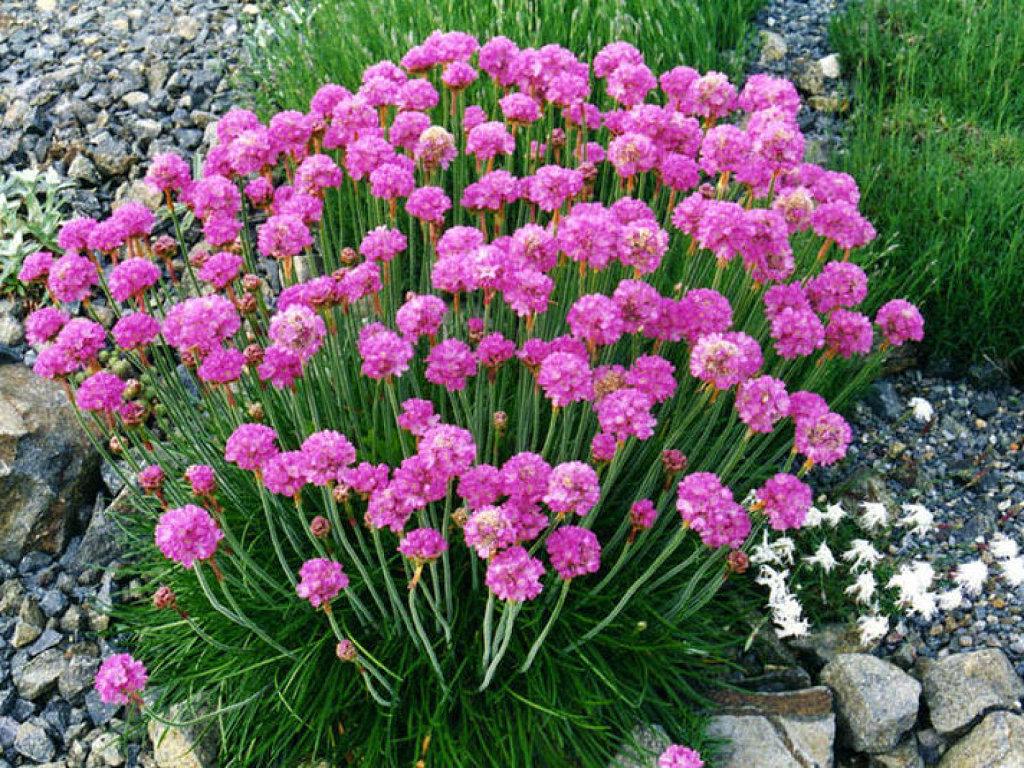 Arte y jardiner a plantas vivaces - Plantas exteriores todo el ano ...