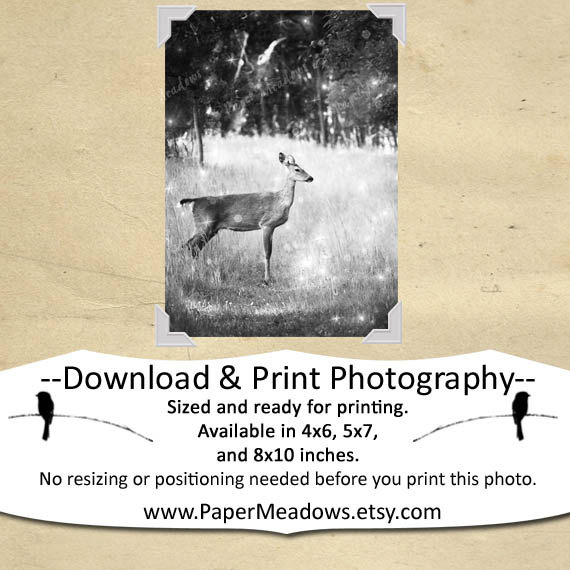 Deer in Sparkly Meadow. A beautiful image for your Holiday Décor or Children's rooms! Softened and textured for for an aged, magical feel. You can purchase and download our photography creations and instantly print at home from our Paper Meadows Photography Shop on ETSY. To Visit our shop now click here.