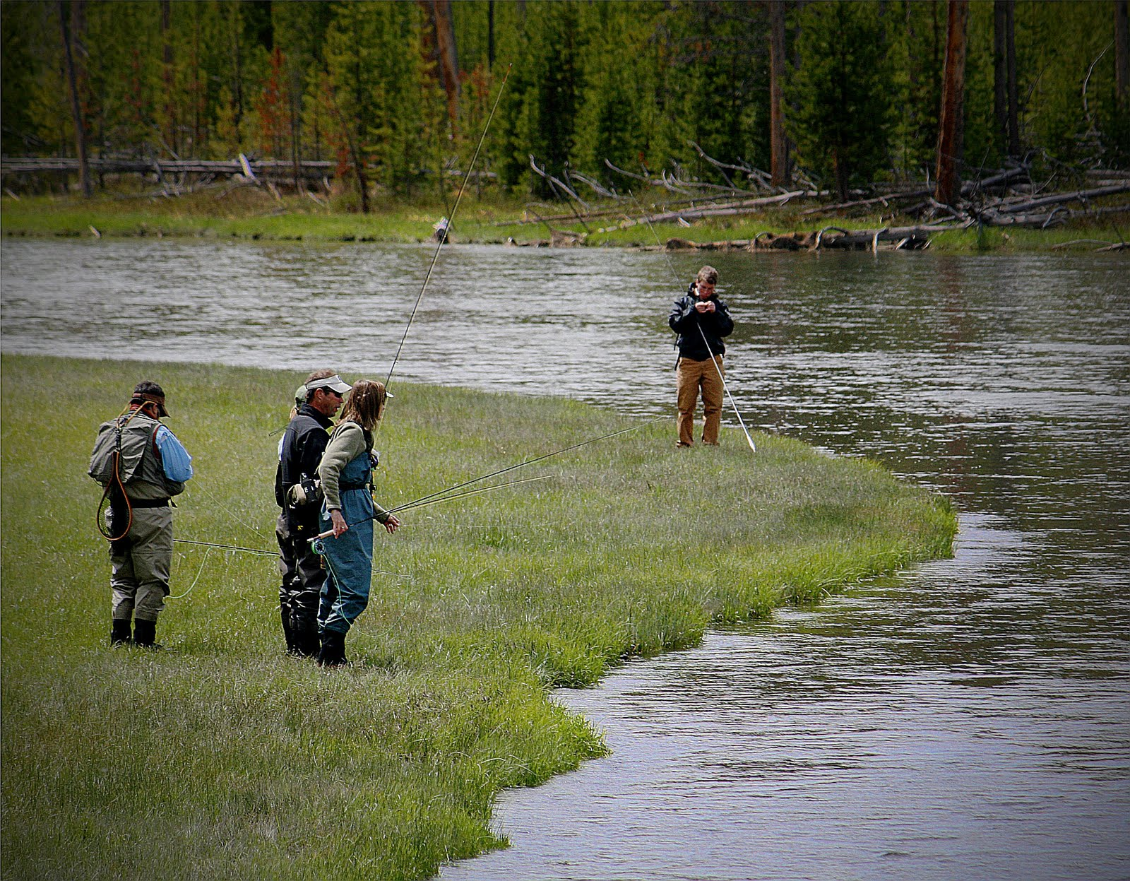 Fly fishing in yellowstone national park better by the day for Yellowstone national park fishing