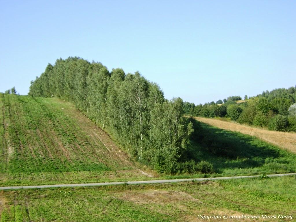 Pola w Wąwolnicy mają wyjątkową konfigurację terenu, gmina  położona jest na Płaskowyżu Nałęczowskim, jednym z subregionów Wyżyny Lubelskiej, w dolinie rzeki Bystrej (prawy dopływ Wisły). Część obszaru gminy leży na terenie Kazimierskiego Parku Krajobrazowego a większość obszaru na terenie jego otuliny. Fot. Dariusz Marek Gierej