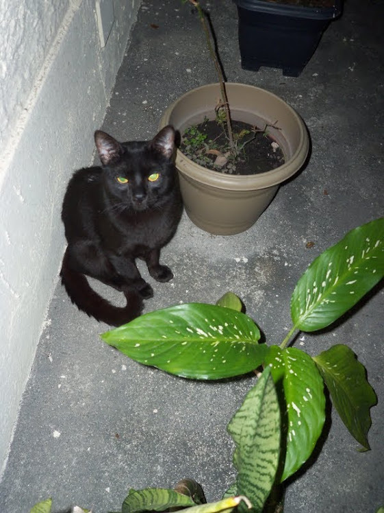 Este era o meu gatinho!