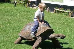 Story Telling Big Turtle