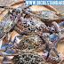 DA regulates capture of kasag or blue swimming crab