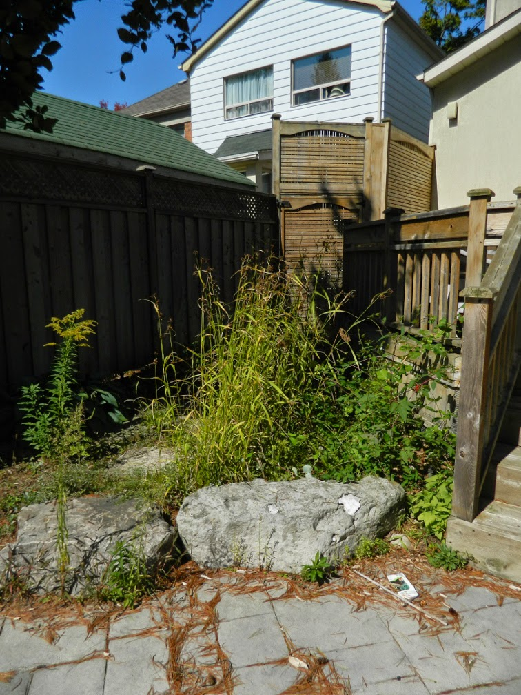 Toronto garden cleanup Bedford Park before  Paul Jung Gardening Services