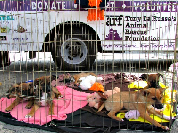 Jack London Square // East Bay SPCA Adoptathon Litter of Puppies
