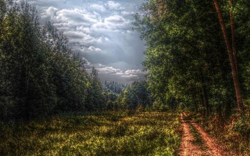 Gambar-Gambar Hutan Tropis Keren
