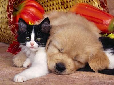 guardería mascotas negocios rentables