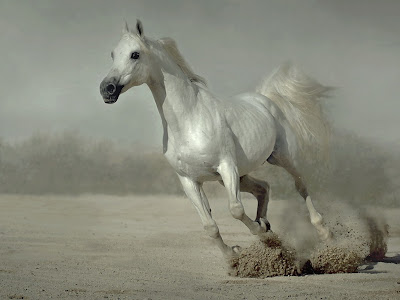White Running Horse Wallpaper for Desktop