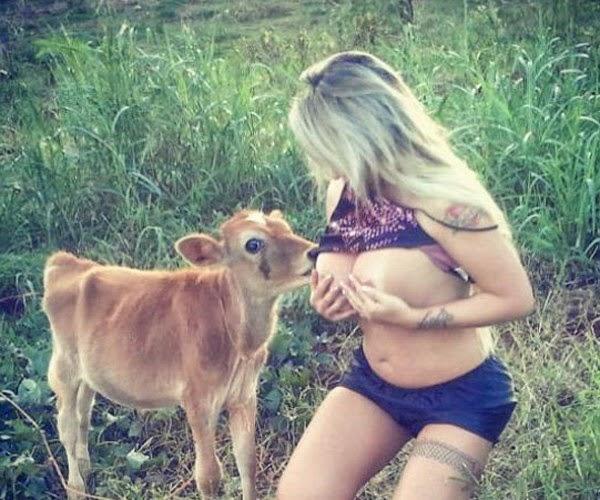 Sabrina Boing Boing com vaca