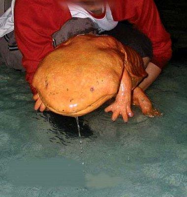 hellbender fish