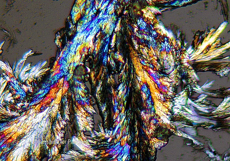 Lactose crystals under the microscope