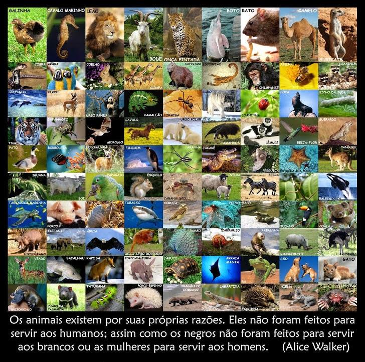 4 de Outubro - Dia Mundial dos Animais