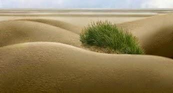 Sa mạc - Sự tạo hóa